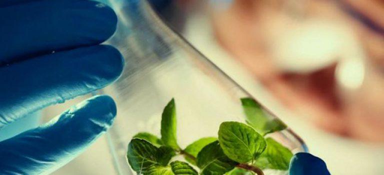 منابع کنکور کارشناسی ارشد زیست شناسی گیاهی (کد ۱۲۱۳)