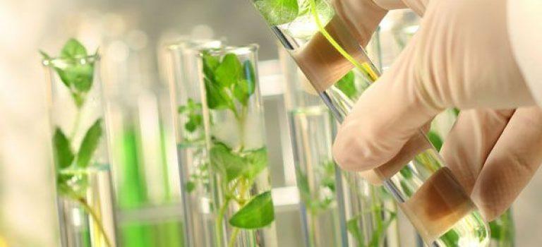 رتبه و کارنامه قبولی کنکور کارشناسی ارشد رشته زیست شناسی گیاهی (کد ۱۲۱۳)