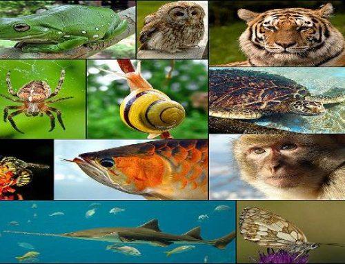 رتبه و کارنامه قبولی کنکور کارشناسی ارشد رشته زیست شناسی جانوری (کد ۱۲۱۴)