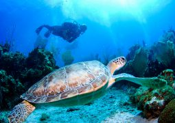 منابع کنکور کارشناسی ارشد زیست شناسی دریا