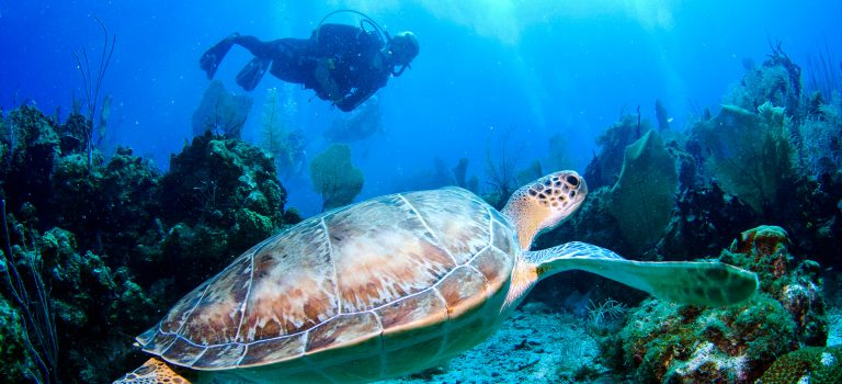 منابع کنکور کارشناسی ارشد زیستشناسی دریا (کد ۱۲۱۶)