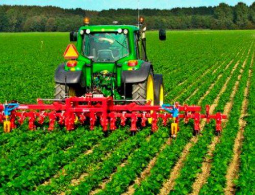 رتبه و کارنامه قبولی کنکور کارشناسی ارشد رشته زراعت و اصلاح نباتات (کد ۱۳۰۳)