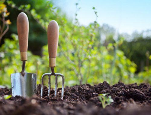رتبه و کارنامه قبولی کنکور کارشناسی ارشد رشته علوم و مهندسی باغبانی (کد ۱۳۰۵)