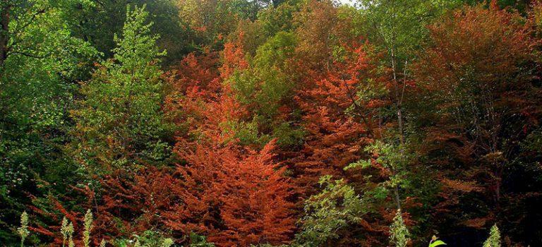 منابع کنکور کارشناسی ارشد علوم و مهندسی جنگل (کد ۱۳۰۷)
