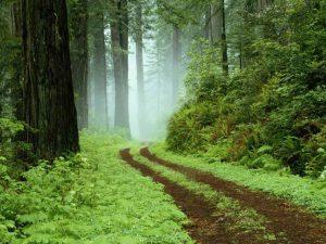 رتبه های قبولی ارشد 96 - 97 - 98 رشته مهندسی جنگل