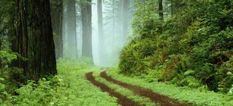 رتبه و کارنامه قبولی کنکور کارشناسی ارشد رشته علوم و مهندسی جنگل (کد ۱۳۰۷)