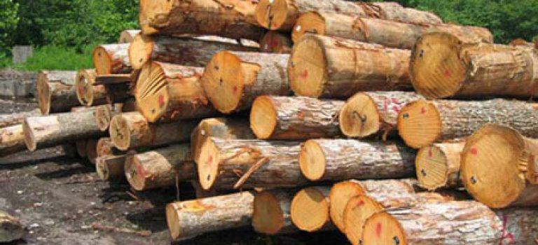 رتبه و کارنامه قبولی کنکور کارشناسی ارشد رشته مهندسی صنایع چوب و فرآورده های سلولزی (کد ۱۳۱۲)