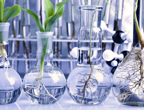 رتبه و کارنامه قبولی کنکور کارشناسی ارشد رشته بیوتکنولوژی کشاورزی (کد ۱۳۲۴)