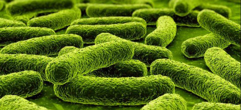 منابع کنکور کارشناسی ارشد باکتری شناسی دامپزشکی (کد ۱۵۰۵)
